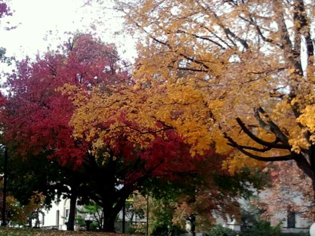 fall-colors-2011-10-30.jpg