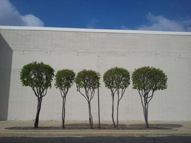 five-trees-green-2012-03-25.jpg