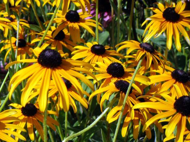 flowers-yellow-IMG_3018.JPG