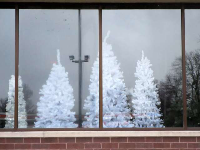 white-Christmas-trees-IMG_2493.JPG
