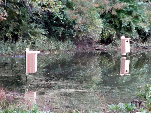 wood-duck-houses-IMG_0875.JPG